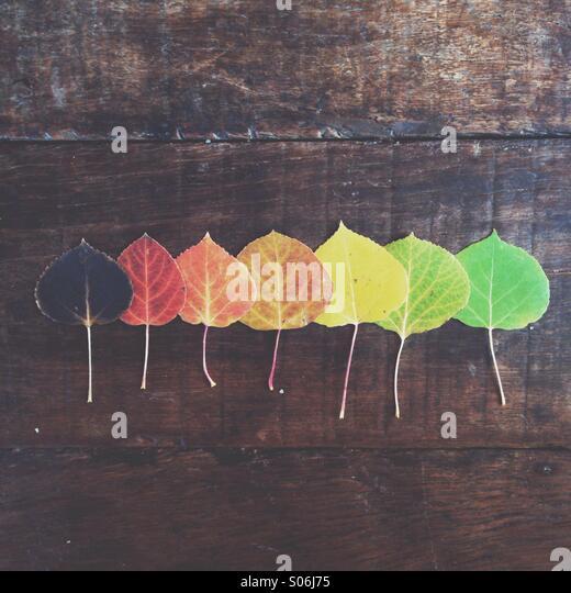 Aspen Rainbow - Stock Image