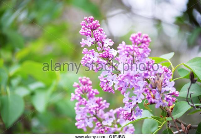 flower-for-the-forum-to-identify-more-ke