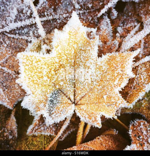 Frosted leaf - Stock-Bilder
