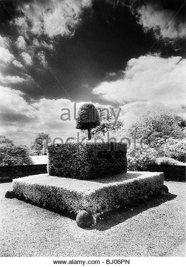 Topiary, Arley Hall, Cheshire, England - Stock-Bilder