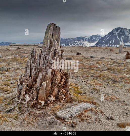 Wooden remains, Smeerenburg, Spitsbergen Island, Svalbard, Norway - Stock Image