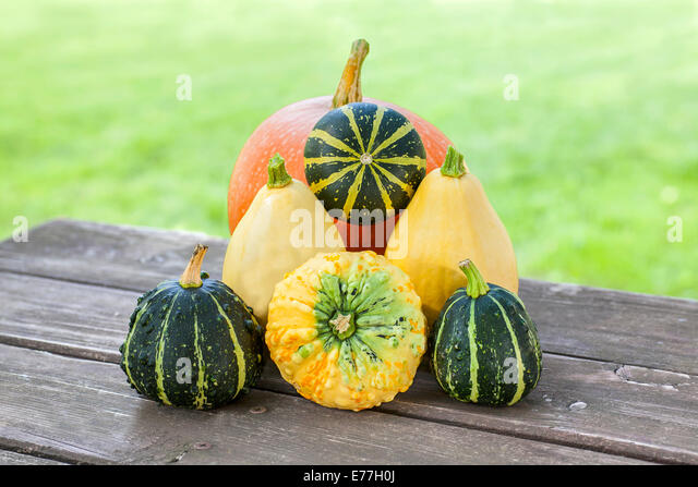 Squash and pumpkins on wooden table in garden. - Stock Image