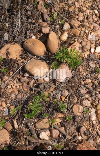 soil detail mas du notaire rhone france - Stock Image