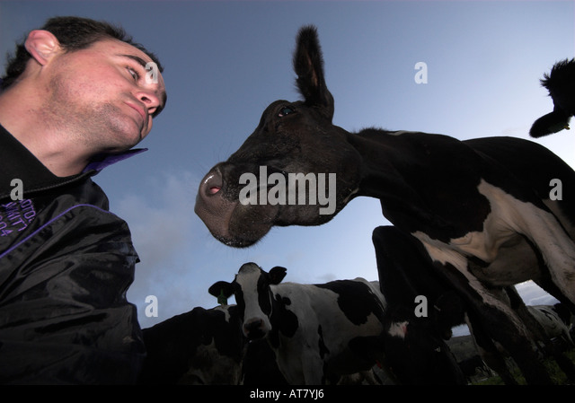 Farming agriculture dairy farming Eastern Cape South Africa - Stock Image