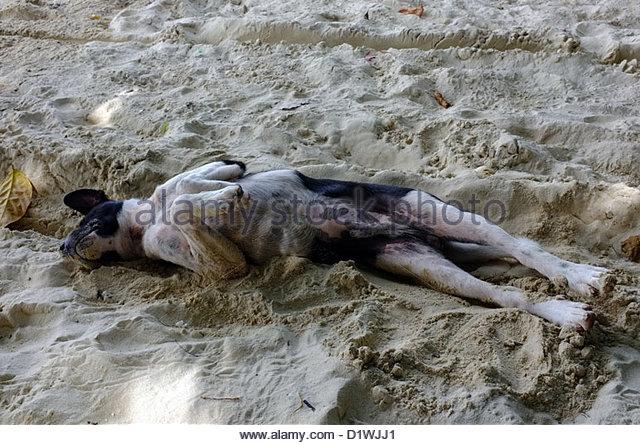 Black dog lying on back - photo#11