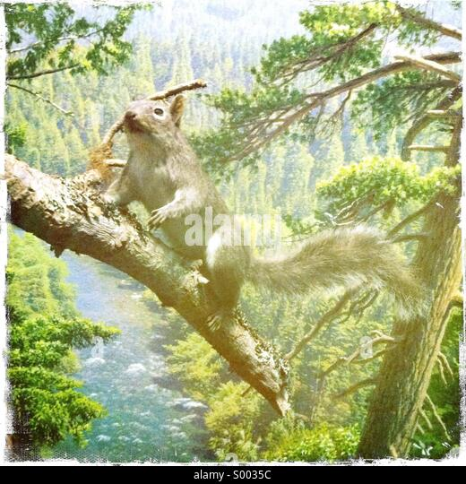 A fake squirrel in a painted environment - Stock Image