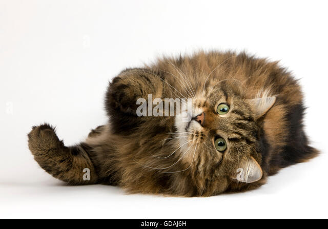 Cat Laying Down Near Food
