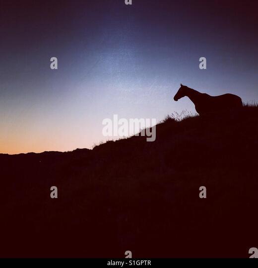Horse silhouette - Stock-Bilder