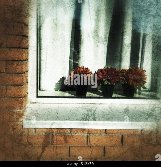 Potted flowers in the window of a brick house. - Stock Image
