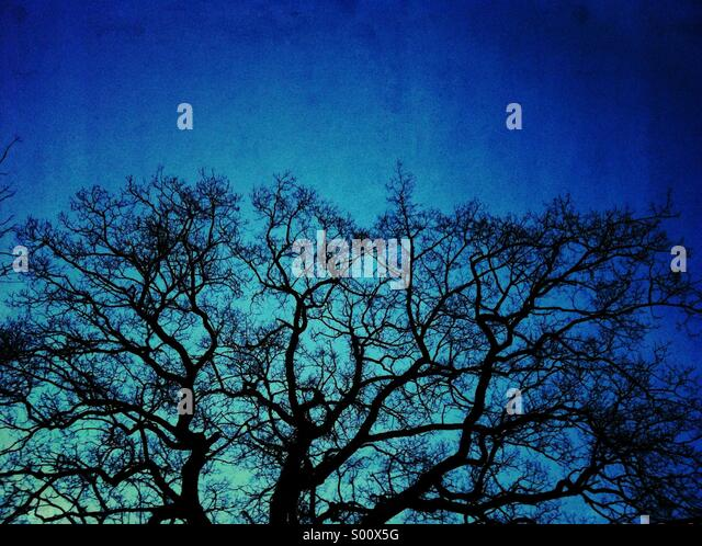 Tree branches blue grunge texture - Stock Image