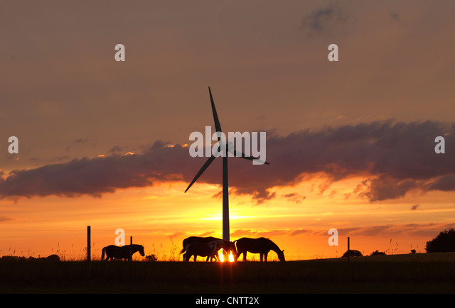 Horses and wind turbine at sunset - Stock Image