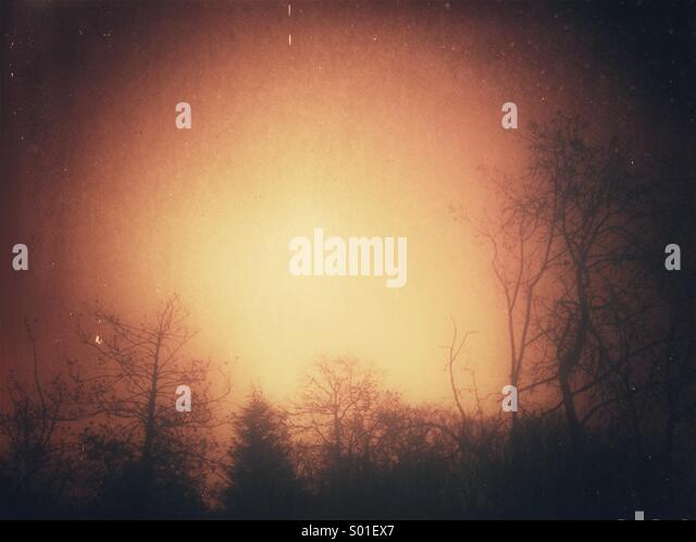 Tree silhouette with grunge effect - Stock Image