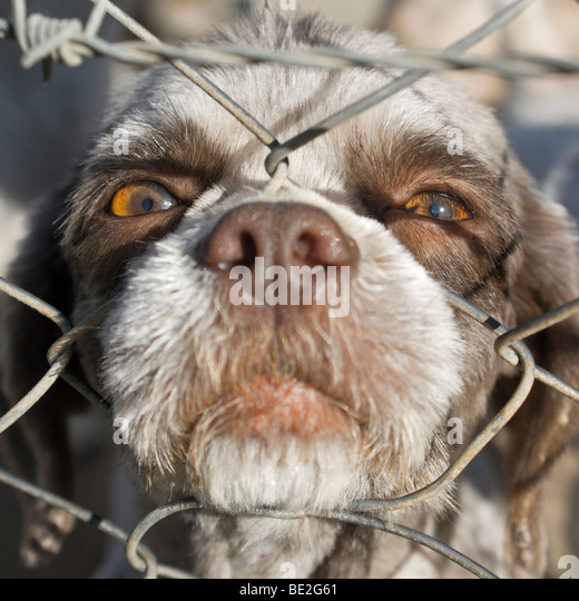 Caged puppy - Stock Image