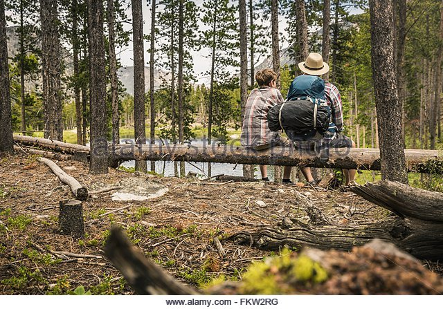 Rear view of father and son sitting on fallen tree in forest, Red Lodge, Montana, USA - Stock-Bilder