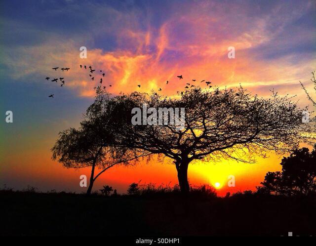 New forest sunset - Stock-Bilder