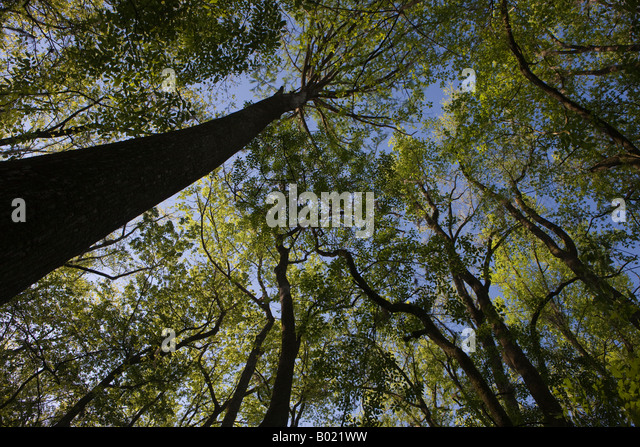 the-forest-canopy-created-by-bald-cypres