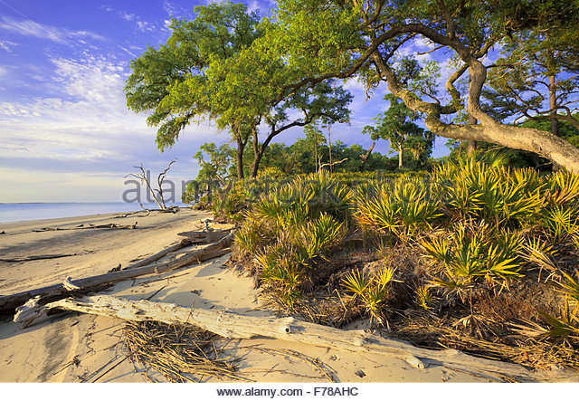 Beach with Saw palmetto and Sand live oak, St. Catherine's Island, Georgia. - Stock Image