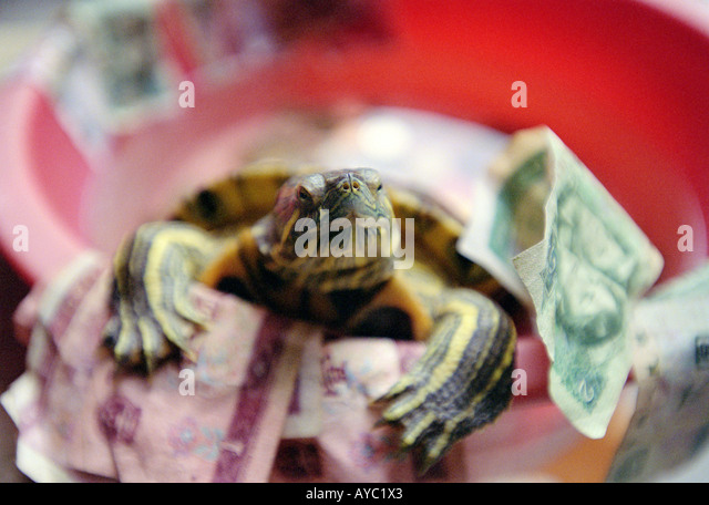 Lucky Temple Turtle, Surrounded by money donations, Ma Kok Temple, Macau - Stock Image