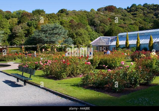Lady Norwood Rose Garden Stock Photos Lady Norwood Rose