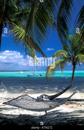 hammock on tropical beach hanging between palm trees - Stock Image