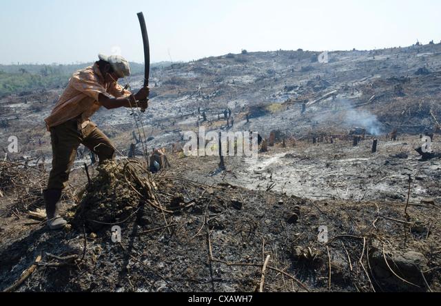 Man slashing vegetation beside road from Pathein to Mawdin Sun, Irrawaddy Delta, Myanmar (Burma) - Stock Image