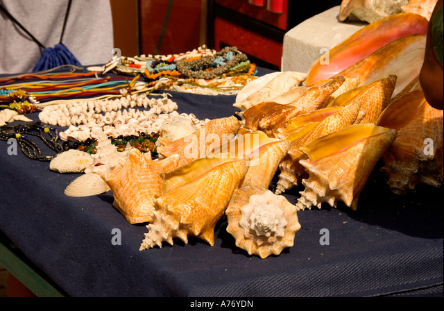 Cozumel Mexico San Miguel town conch shells souvenirs on table - Stock Image