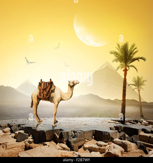 Camel and birds under moon near pyramids.Elements of this image furnished by NASA - Stock Image