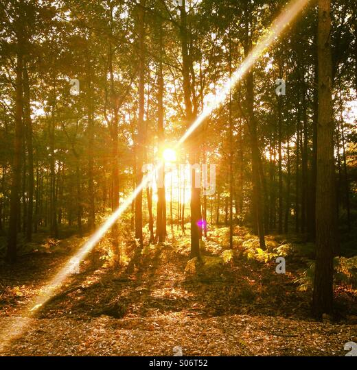 Sunlight through the trees - Stock Image