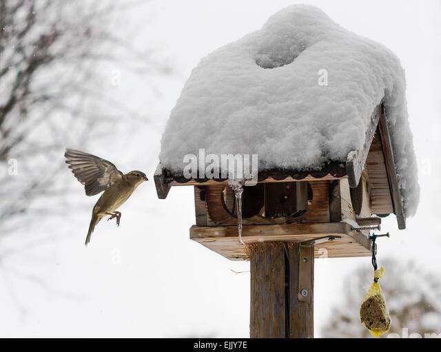 Wooden Bird Feeder Stock Photos Amp Wooden Bird Feeder Stock