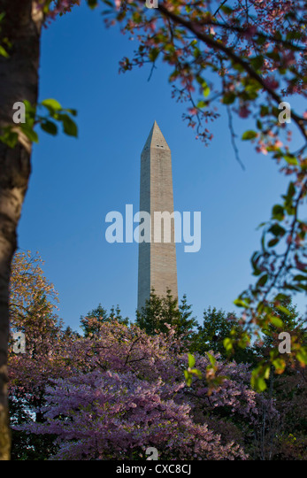 The Washington Monument framed by Japanese cherry trees in bloom, Washington D.C., United States of America, North - Stock Image