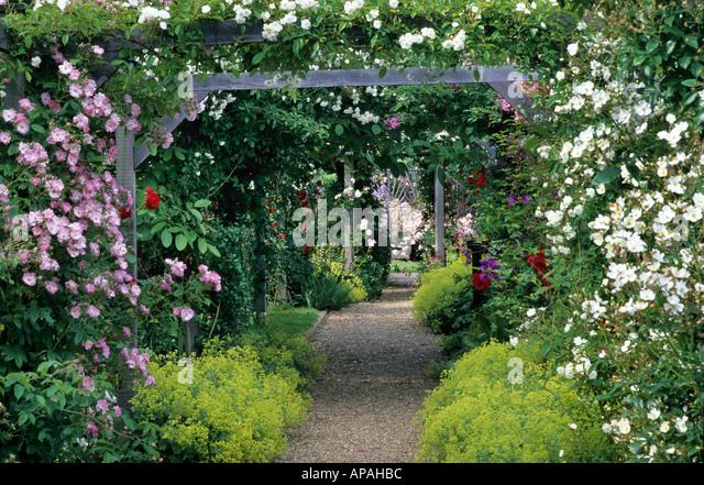Rose arbour stock photos rose arbour stock images alamy - Garden arch climbing plants ...