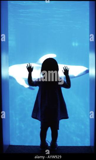 silhouette of a girl watching a fish from aqualium glass - Stock-Bilder