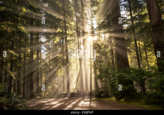 Road/trail along Opal Creek with sunburst/godrays. Opal Creek Wilderness, Oregon - Stock Image