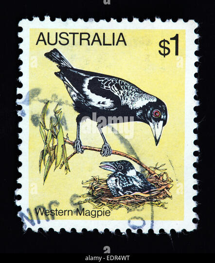 Used and postmarked Australia / Austrailian Stamp - Western Magpie - Stock Image
