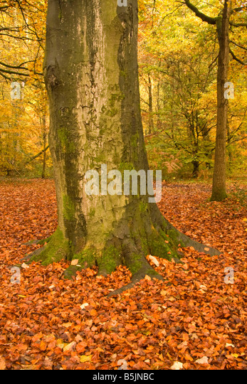 Autumn in Styal Woods, Cheshire, UK - Stock-Bilder