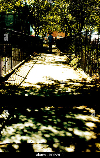 A single person walking along a path between iron railings under the shadow of cherry trees - Stock Image
