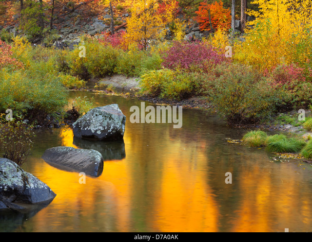 Wenatchee National Forest, Washington: Fall colors reflecting on the Wenatchee River in Tumwater Canyon - Stock Image