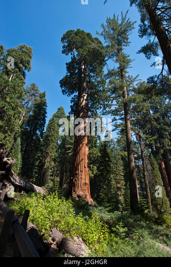 catholic single women in sequoia national park Which was inhabited by black women without a single man sequoia national park, home to the giant sequoia to california were roman catholic.