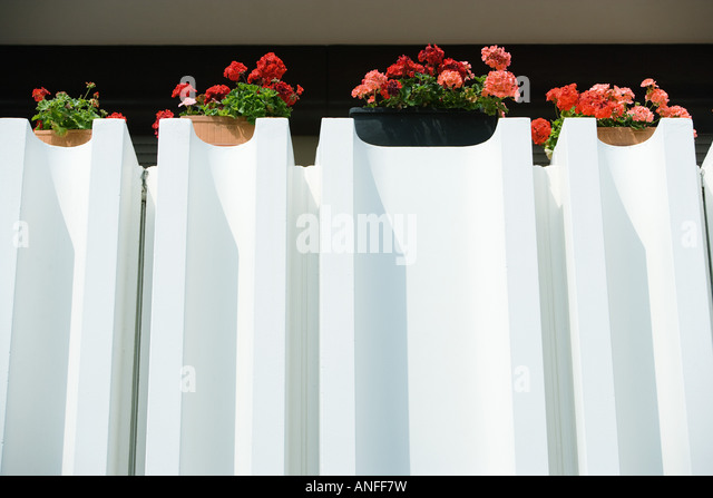 Geraniums in window boxes - Stock Image