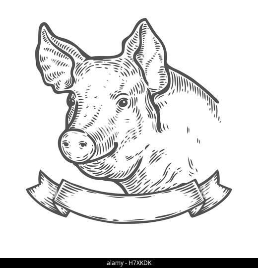 Line Drawing Of A Pig Face : Pig illustration meat stock photos
