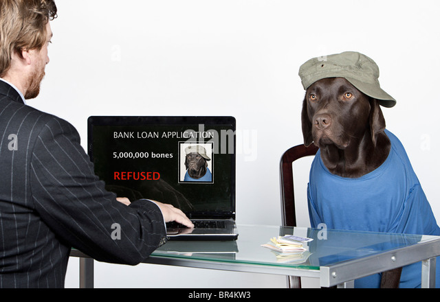 Humourous Shot of a Scruffy Chocolate Labrador with his Bank Manager - Loan Refused! - Stock Image