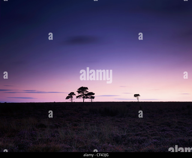 Trees silhouetted at dusk on Fylingdales Moor. - Stock Image