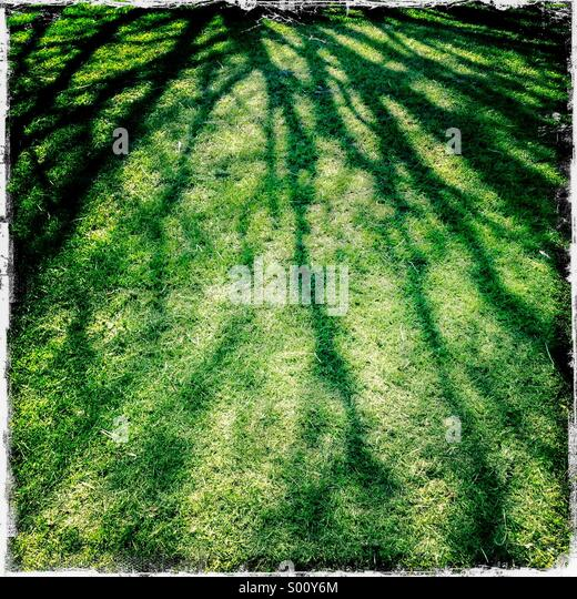 Abstract shadow of tree branches on grass lawn. Hipstamatic, iPhone. - Stock Image