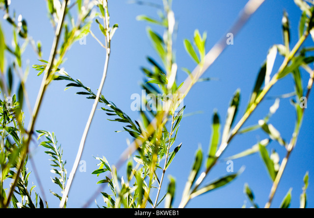 Closeup on vegetation - Stock Image
