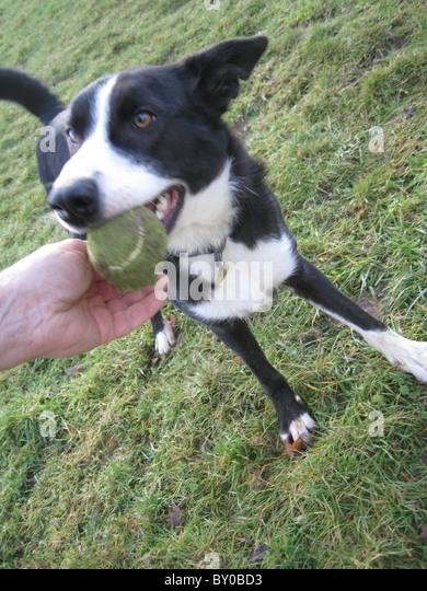 Newbury Dog Rescue