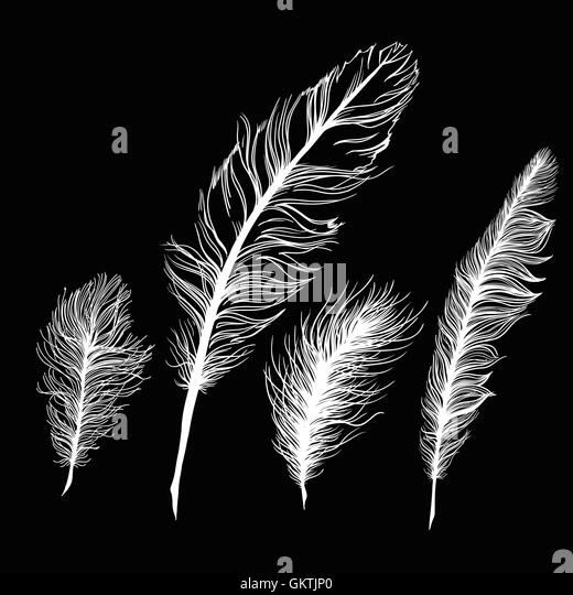 white feathers black background stock photos amp white