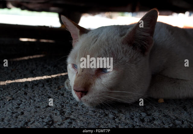 lonely sad cat - photo #30
