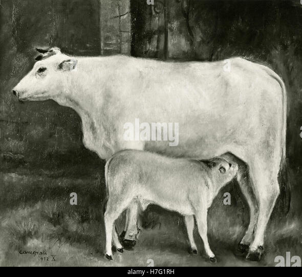 Painting representing a cow and calf, by Amerigo Canegrati, Italy - Stock Image