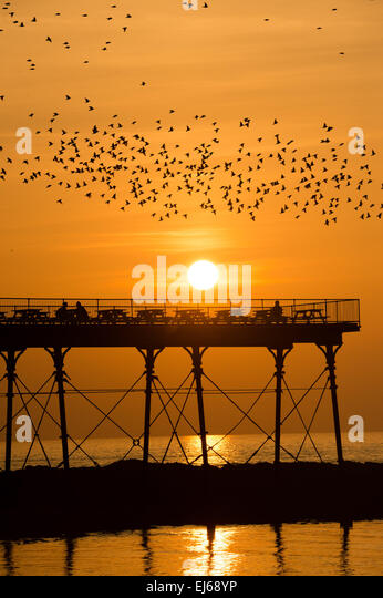 Aberystwyth, Wales, UK. 22nd March, 2015 UK weather:   Thousands of starlings flying in as the sun sets over Aberystwyth - Stock-Bilder