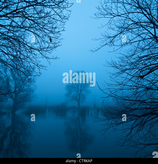 Tree by a lake in the morning mist - Stock Image